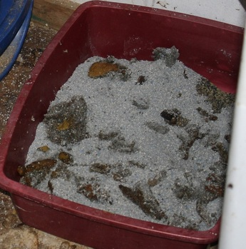 Worms In Cat Litter Box